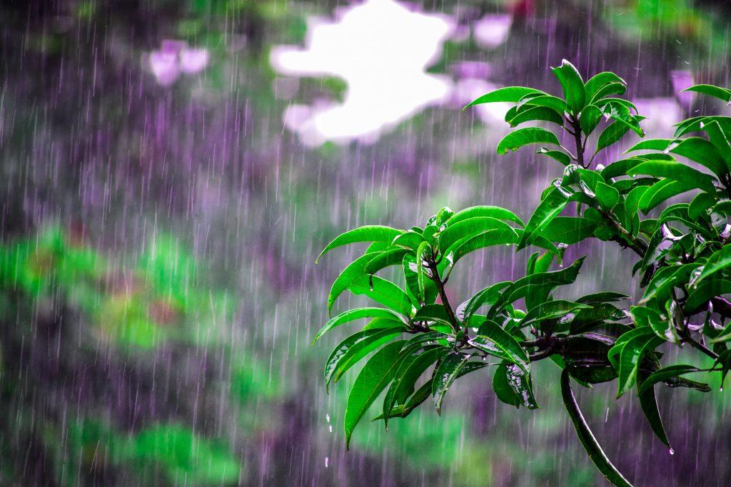 シンガポールの雨季は11月〜2月|雨季での旅行が意外におすすめな理由